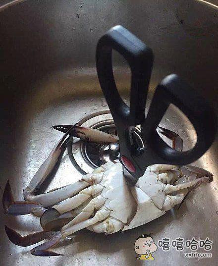 螃蟹你死的好惨啊,都是我女朋友的错