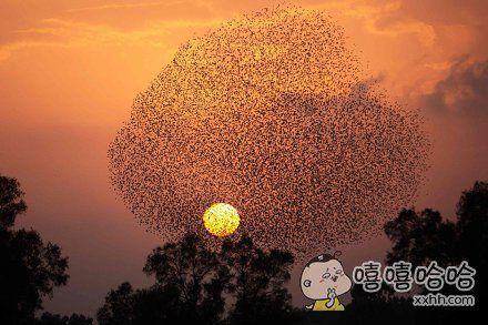 一群椋鸟迁移空中,形成有规则的图形