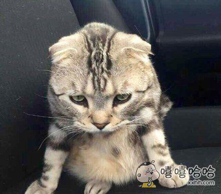就你那三脚猫的功夫,吓唬谁?