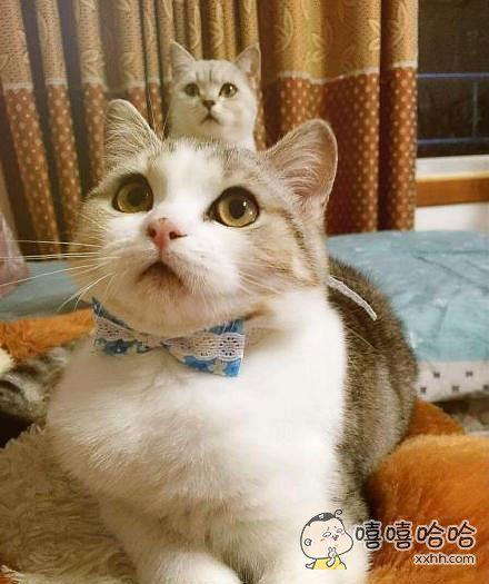 主人,你看我头上长了个喵!