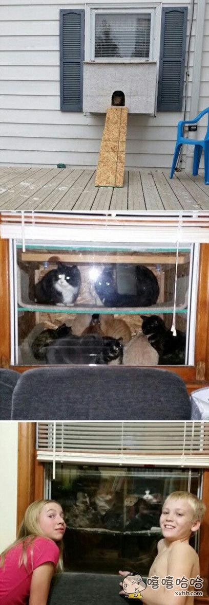 冬天来了,一户人家在自己窗外搭了个棚子。外面的流浪猫们就可以跑进来借着房子里的暖气取暖。这家的小朋友只要把窗帘拉开,就能看到窗外棚子里这一窝萌猫。