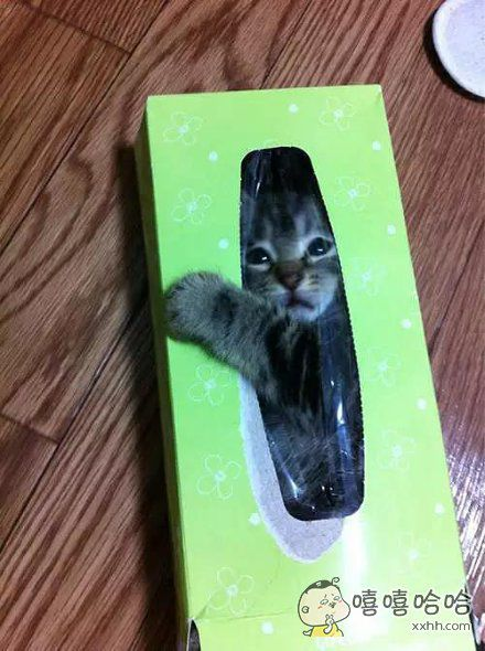 纸盒里的杀手