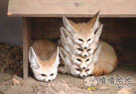 火狐——新建窗口&多标签页