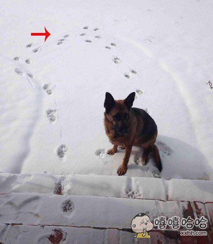 一个汪星人的主人每天都会打开门让狗狗自己出去溜达一圈,拉撒完事儿后的狗狗大约20分钟后就会自己回来,然后在门口叫两声让主人开门。昨天突然下雪了,送狗狗出去20分钟后主人听到门口狗叫,打开门发现,被狗糊弄了。。。。。