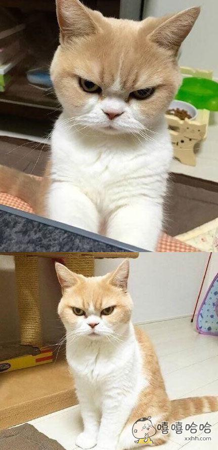动物生气gif