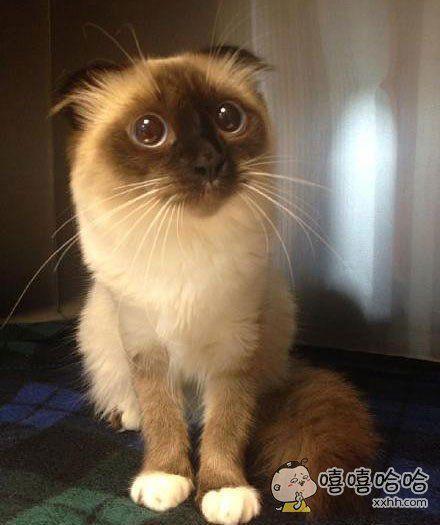 兽医院里,一只来做绝育手术的猫。。。