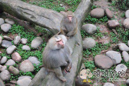 猴哥的金箍棒好短好长