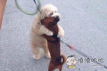 这条叫亨利的汪星人会拥抱主人遛它时路过的每一只狗。。。