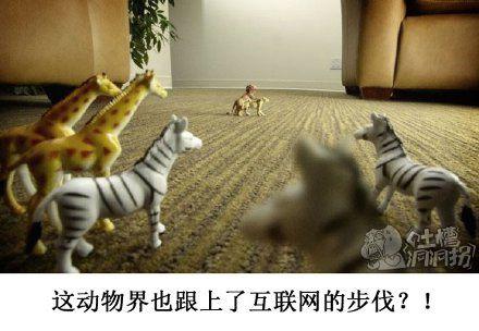 最近某直播平台的爆款,直播造小孩已经延伸到动物界了
