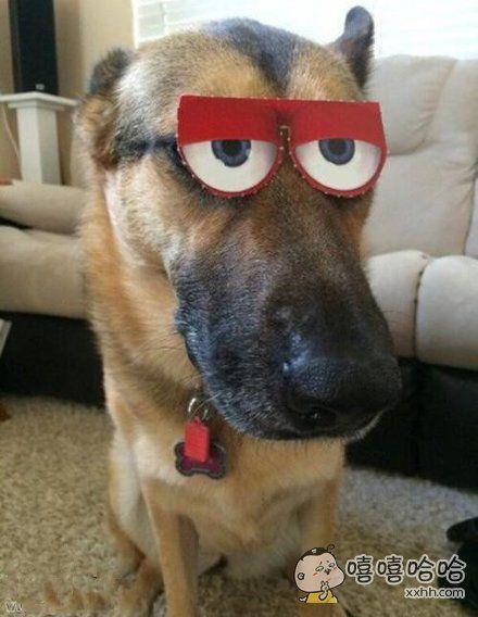 老公把狗搞成这样
