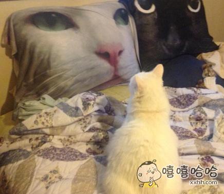 这俩货的脸咋特喵的这么大!大脸猫吗?
