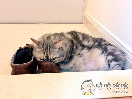 家里的猫有个怪癖