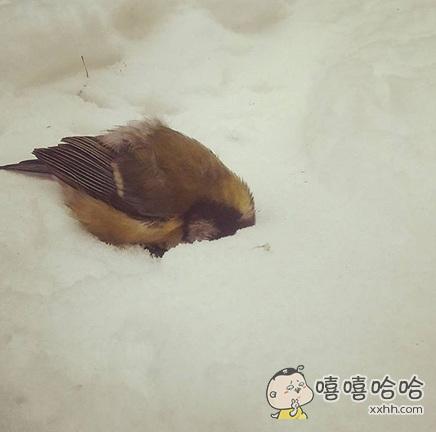 一不小心飞着飞着就睡着了。。