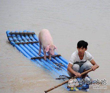 少年和他的pig的漂流记。