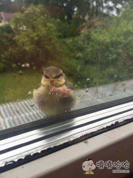 说你呢,赶紧让我进去。