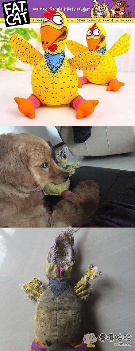 给狗狗买的新玩具。
