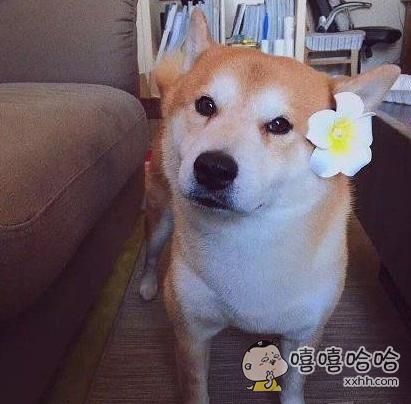 一只貌美如花的汪星人
