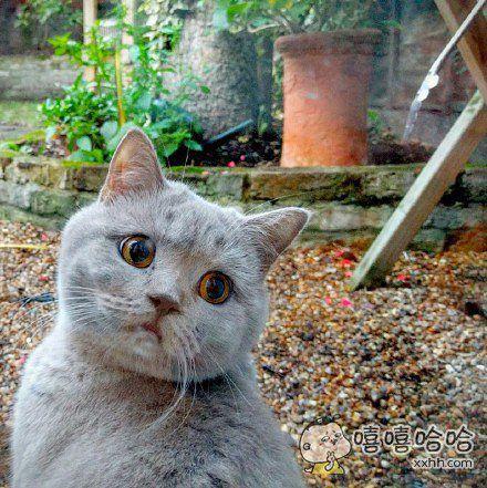 一网友把喵星人为他抓来的猎物给扔了的时候,猫咪是这样一幅表情。。他瞬间觉得愧疚了。。。