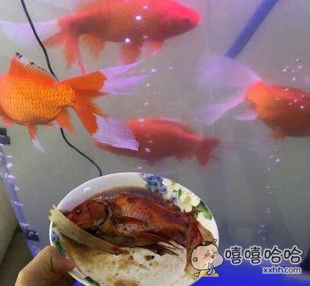 好熟悉的鱼。。