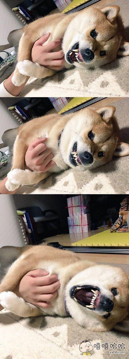 不要摸我!!!嗷~~
