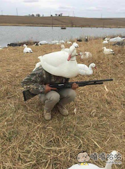 用这只鹅伪装一下,就没有人能发现我了。