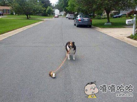 耗子:猫呢?你出来,你再欺负我试试!