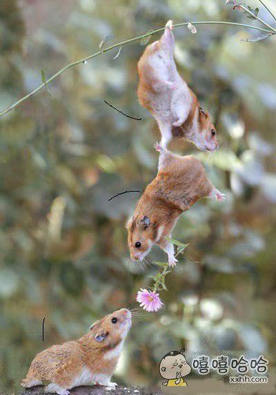 动物界的和谐简直太有爱了