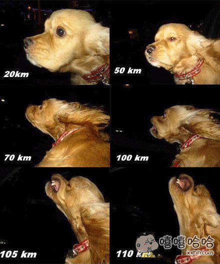 从狗的表情看车速