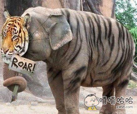 我可比老虎厉害