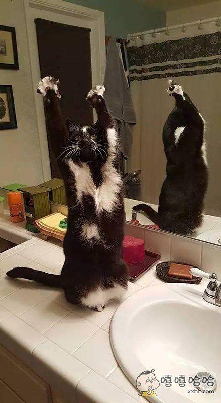 哥们,举起手来