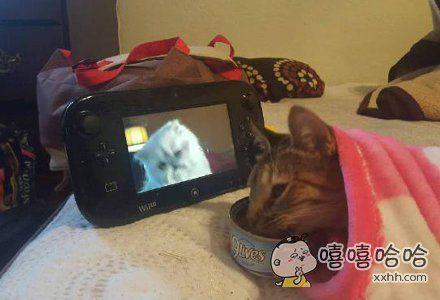 这是一只正在难过的猫咪,于是……