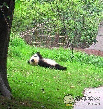 有时候,我只是想成为一个熊猫