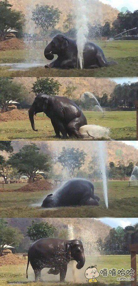 大象故意弄坏喷泉,然后玩嗨了,还知道洗屁屁~