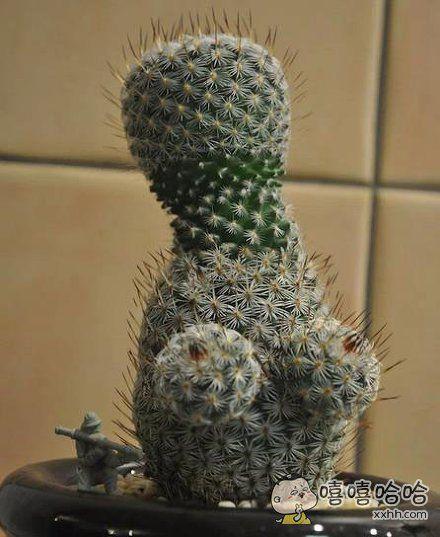 这植物有毒。。。