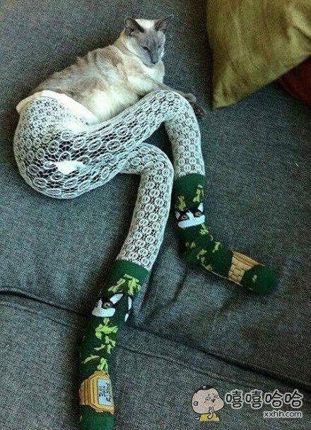 细长腿猫咪,性感妩媚!