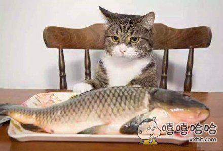 """这就叫做""""心有鱼,而力不足……"""""""