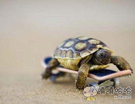 乌龟要改变自己慢的天性。