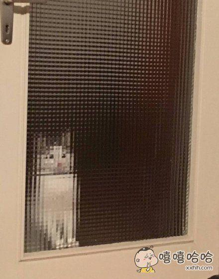 低像素的猫