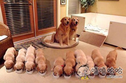 狗狗的军事化管理。