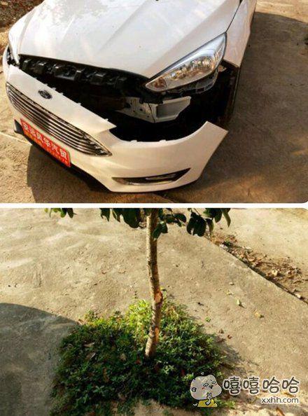 现在的车真是越来越脆弱,一个小树苗就挂烂了