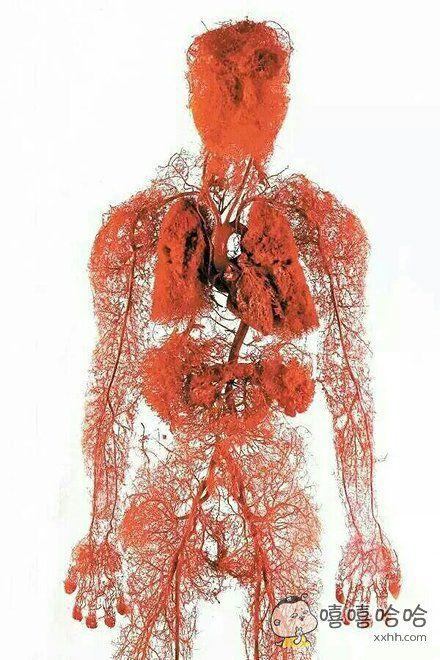 全身的血管图。。。看到脸我就跪了