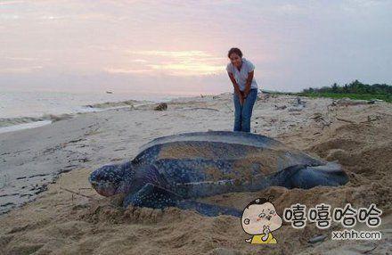 海龟如此巨大。