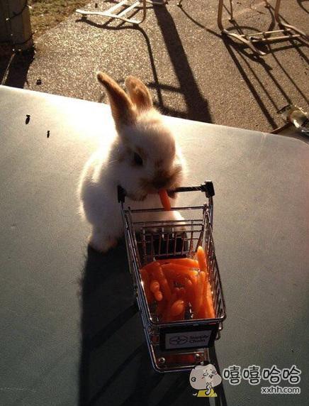 今天超市萝卜大优惠呢~~