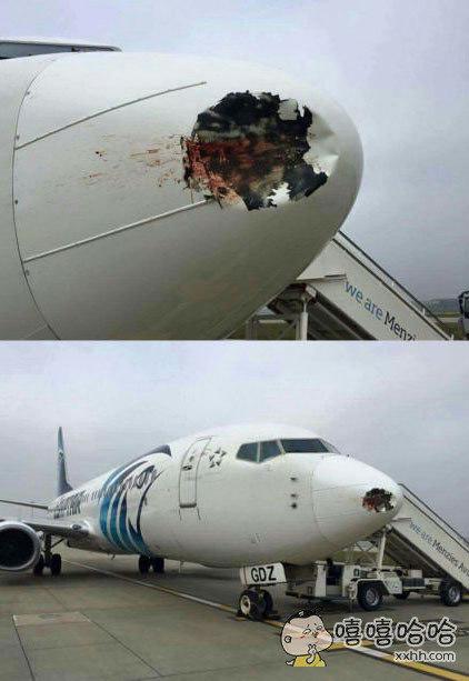 总说飞机最怕鸟,这张相片就是鸟撞飞机的后果