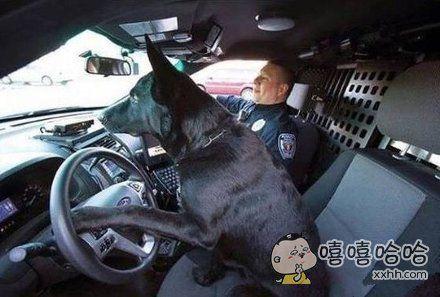 看到街上有一条狗在开车,吓得我马上报警