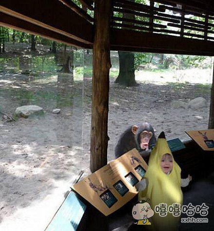 猴子内心:香蕉怎么还会动?