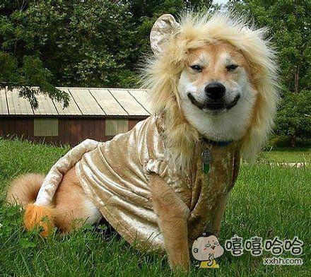 国服第一狮子狗