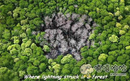 树林被雷劈到以后