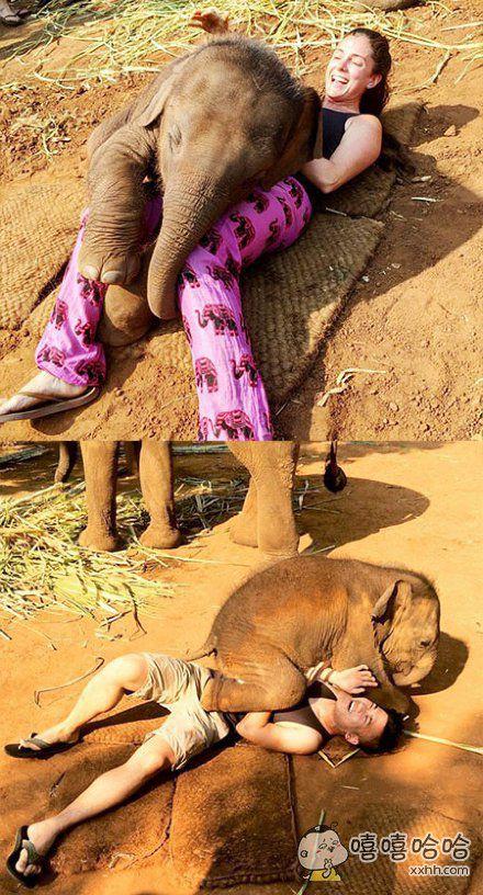 泰国清迈一家农场的小象Nampuu,因为痴迷于和游客抱抱而成了明星。看它抱抱的画风,简直厚颜无耻还有点可爱呢