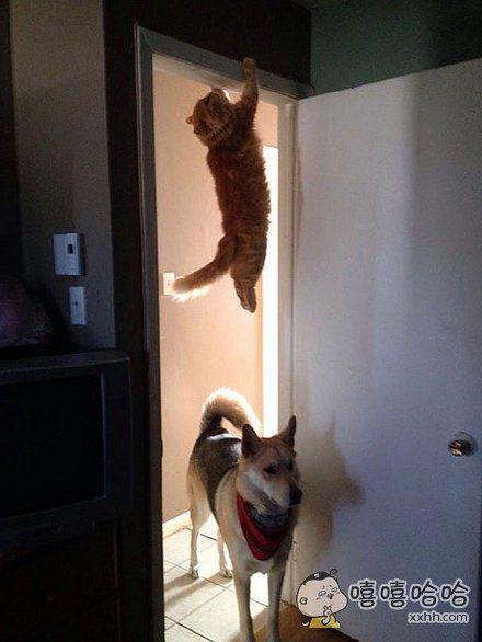 请问有看到一只猫从这里过去吗?